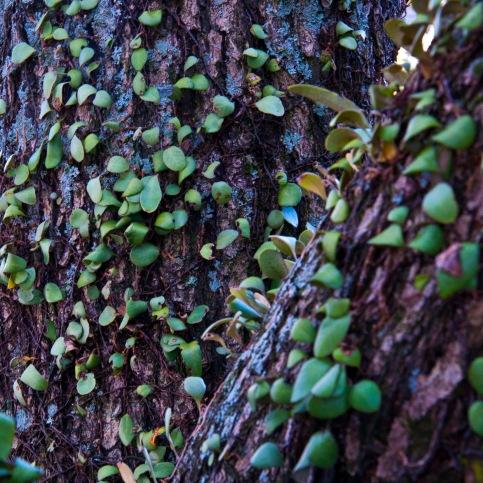 tohle tady roste na stromech