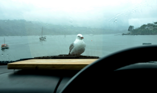 poor seagull is 'enjoying' heavy rain