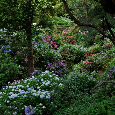 Beautiful Botanic gardens, you have to see and smell them
