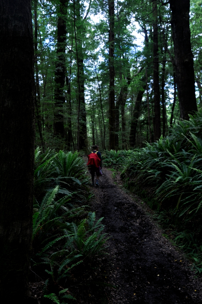 Kepler track - forest