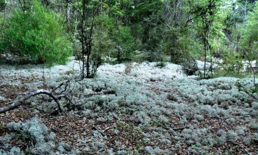 Kepler track - mossy forest