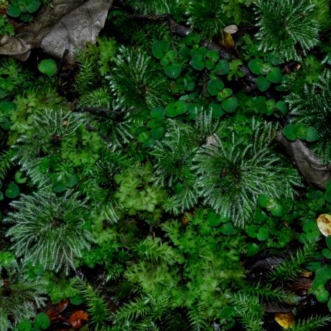 Kepler track - peculiar moss