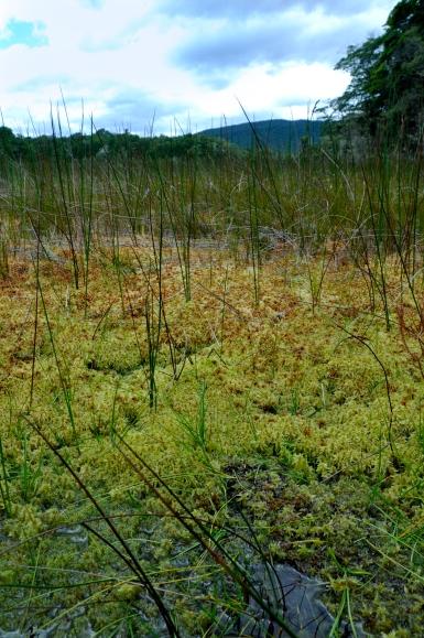 Kepler track - wetlands