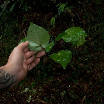 back side of leaf