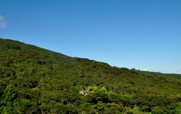 Forrest above Manu Bay