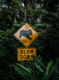 Slow Down - Pozor na koalky